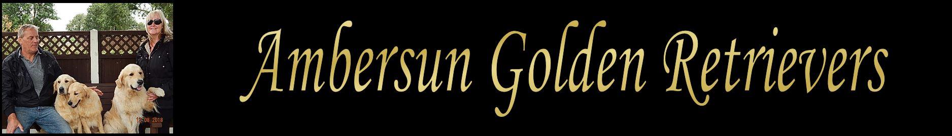 Ambersun Golden Retrievers